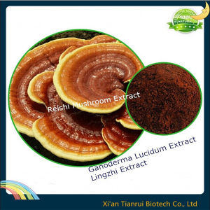 Lingzhi Extract/Ganoderma Lucidum Spore/Reishi Mushroom Extract pictures & photos