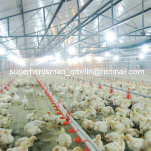 Full Set Automatic Poultry Equipment for Chicken Farm pictures & photos