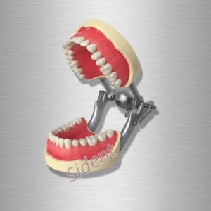 Dental Orthodontics Study Model with Ceramic Brackets pictures & photos