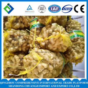 China Fresh Ginger with High pictures & photos