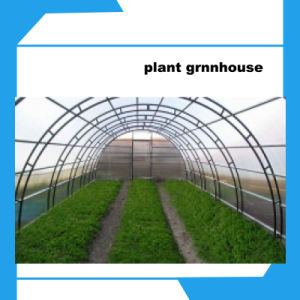Multispan Plastic Film Greenhouse for Vegetable Horticulture Hot Sales pictures & photos