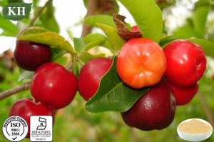 Pure Natural Vitamin C Acerola Cherry Extract pictures & photos