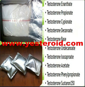 High Quality Bodybuilding Steroid Powder Testosterone Isocaproate