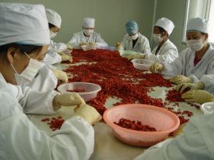 Organic Goji Berries 5kg pictures & photos