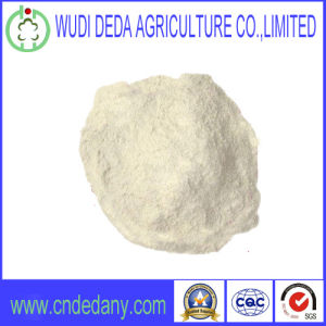 Feed Grade High Quality Wheat Gluten Powder Flour pictures & photos