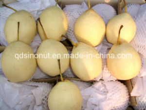 Chinese Ya Pear (32/36/40/44) pictures & photos