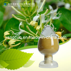 Green Coffee Bean Extract 25% 50% 98% Chlorogenic Acid pictures & photos