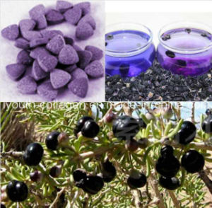 Health Food, 100% Natural Wild Black Wolfberry/Chinese Wolfberry Chewable Tablet, King of Anthocyanins, Anticancer, Antiaging, Wolfberry/Medlar pictures & photos