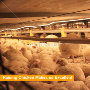 H Type Broiler Chicken Cage Used Poultry Auger Feed System for Poultry pictures & photos