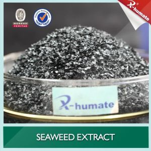 100% Water Soluble Seaweed Extract Flake Organic Fertilizer Extracted From Ascophylum Nodosum pictures & photos