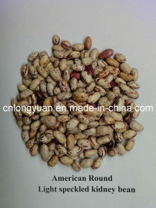 American Round Light Speckled Kidney Bean pictures & photos