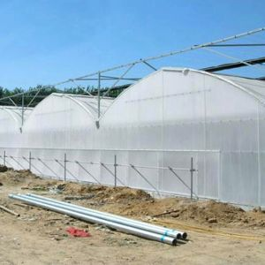 Agricultural Multispan Plastic Film Greenhouse for Vegetable Growing pictures & photos