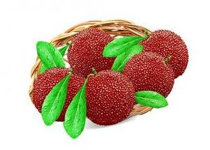 Manufacture with Top Quality Red Bayberry Extract, Arbutus Extract pictures & photos