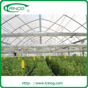 Multi span film commercial greenhouse for hydroponic pictures & photos