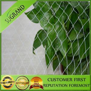 Diamond Bird Net and Hexongal Bird Net Hot Sale pictures & photos