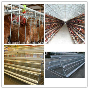 2015 Automatic Broiler and Laying Hens Cage System for Poultry Farming House pictures & photos
