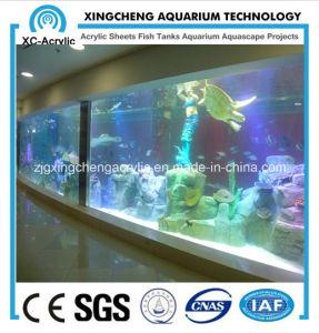 Large Wall Aquarium pictures & photos