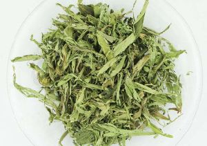 Stevia Leaves Healthy Tea pictures & photos
