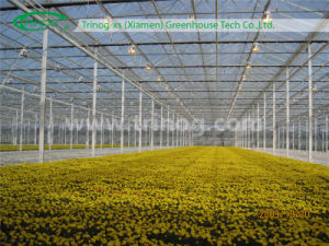 Industrial Glass Greenhouse for Flowers pictures & photos