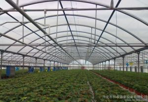 Galvanized Steel Frame PC Sheet Hydroponic Systems Green House pictures & photos