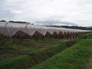 Apple Tree Orchard Anti Hail Net, Hail Guard Net 2.7m, 3m, 4m Wide pictures & photos