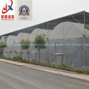 Experienced and Elegant Multi-Span Tunnel Green House pictures & photos