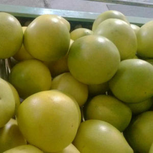 New Crop Fresh Honey Pomelo pictures & photos