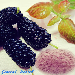 Natural Spray Dried Mulberry Powder (Fruit and Vegetable Powder)