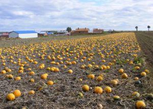 New Crop European Standard Snow White Pumpkin Seeds pictures & photos