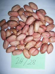 Peanut Kernel pictures & photos
