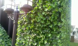 High Quality Artificial Plants and Flowers of Green Wall Gu-Wall0981252969 pictures & photos