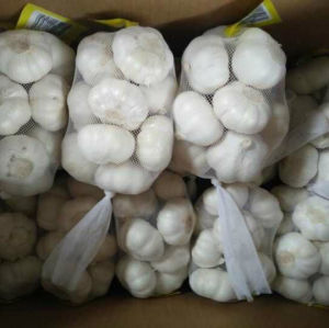 5.0cm and up Small Packing Pure White Garlic pictures & photos