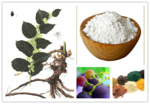 Anti Cancer&Antioxidant Synthetic Resveratrol 98% pictures & photos