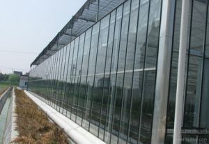 Factory Direc Sales Vegetable Growing Intelligent Glass Greenhouse