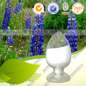 Factory Direct Supply High Quality Lupin Extract Lupeol pictures & photos
