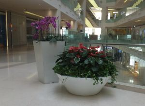 Fiber Glass Flower Planters pictures & photos
