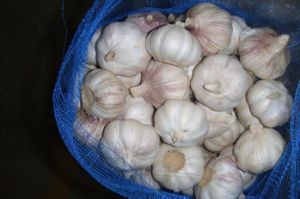 2016 High Quality Normal White Fresh Garlic pictures & photos