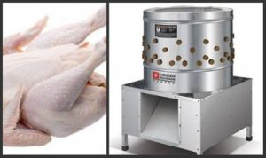 Professional Stainless Steel Chicken Plucker pictures & photos