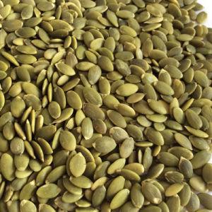 Hot Sale Pumpkin Seeds Kernels with Hgih Quality A Grade