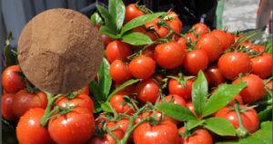Amino Acid for Fertilizer Organic Nitrogen pictures & photos