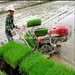 6row Hight Speed Rice Transplanter (T-119) pictures & photos