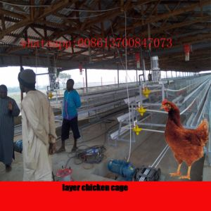 Automatic Poultry Farming Equipment/Chicken Layer Cage pictures & photos