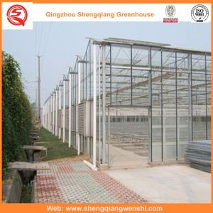 Agriculture PC Sheet Green House for Vegetables/Flowers pictures & photos