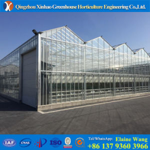 Steel Frame Outddoor Vegetable Glass Greenhouse with Hydroponic Systems pictures & photos