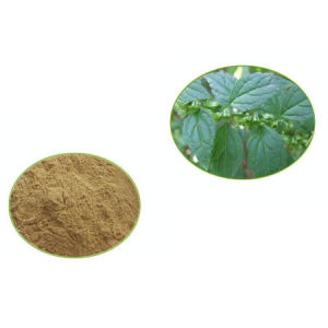 Lemon Balm Extract/Melissa Officinalis Extract 1%-10%Rosmarinic Acid pictures & photos