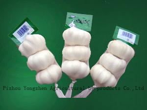 2010 Fresh Garlic