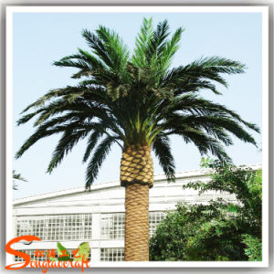 Outdoor Decoration Artificial Fake Plastic Date Palm Tree pictures & photos