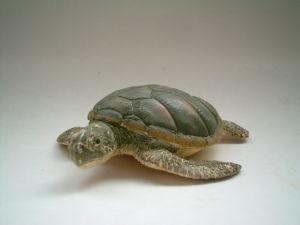 Plastic Sea Turtle Toy