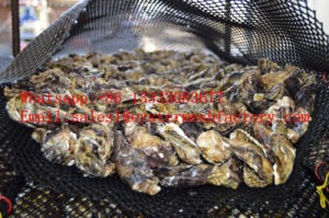 Oyster Mesh, Oyster Cage, Oyster Basket (factory) pictures & photos