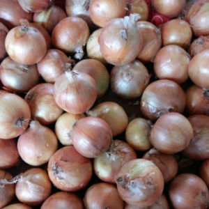 Professional Supplier of Chinese Fresh Yellow Onion pictures & photos